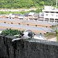侯硐貓村 (27).JPG