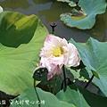 大村雙心池塘 (24).JPG