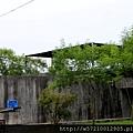 勝洋水草 (7).JPG