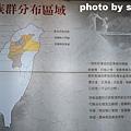 泰安鄉泰雅原住民文化產業區 (22).JPG