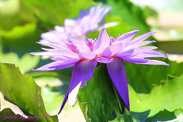莫內花園 (17).JPG