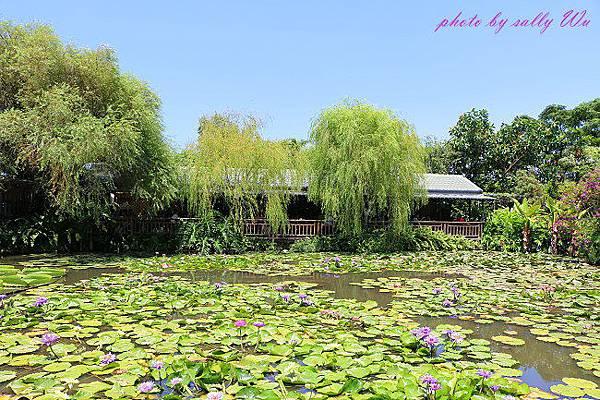 莫內花園 (26).JPG
