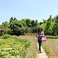 莫內花園 (38).JPG