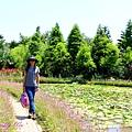 莫內花園 (39).JPG