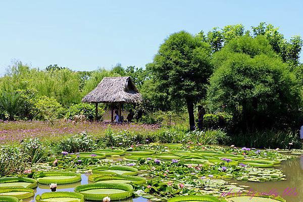 莫內花園 (40).JPG