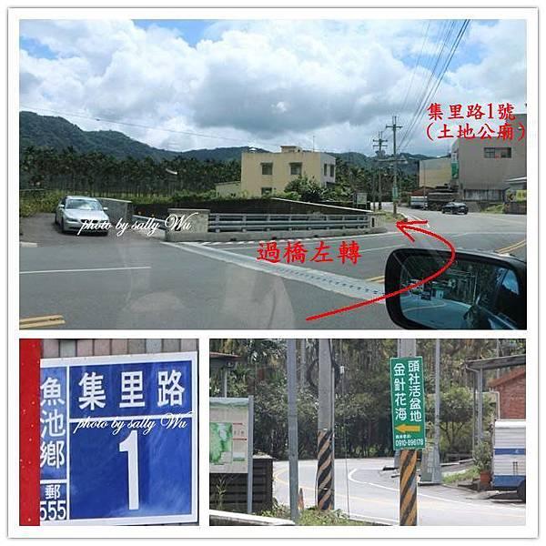 日月潭頭社金針花 (5).jpg