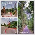 桐遊柿界夜景 (1).jpg