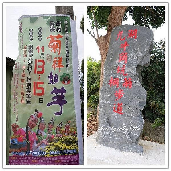 2015銅鑼杭菊 (2).jpg