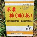 沐心泉金針花 (39).JPG