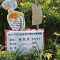 六石石山金針花 (54).JPG