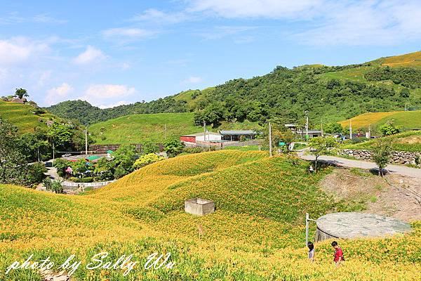六石石山金針花 (59).JPG