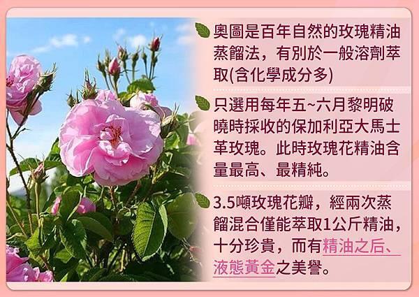 奧圖玫瑰.jpg
