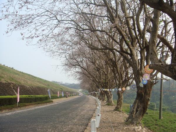 烏山頭櫻花季,就只有這一排櫻花樹而已..還蠻漂亮的啦!