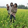 後來發現,油菜花田也是一個很好拍照的景點!怎麼拍怎麼美啊,怎麼會這樣?