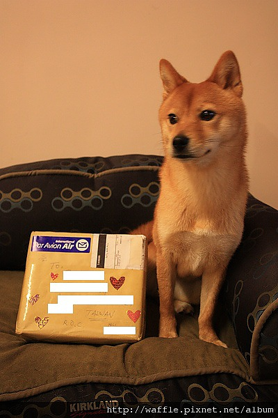 waffle n parcel.jpg