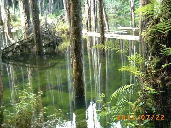 水面下的水草也好漂亮.JPG