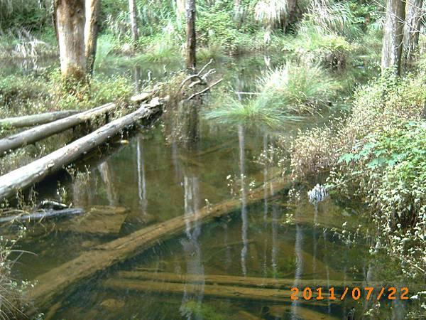 枯木倒臥水中有九寨溝的fu.JPG