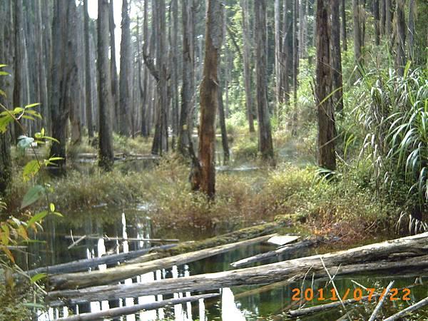 森林中有水水中有枯木.JPG