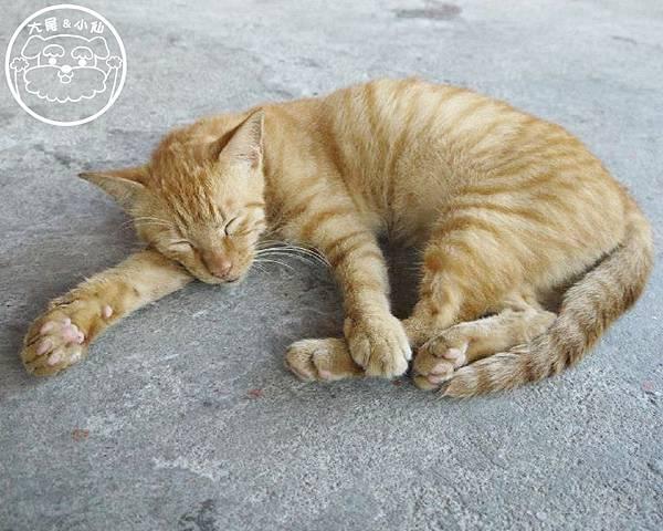 睡很熟的貓