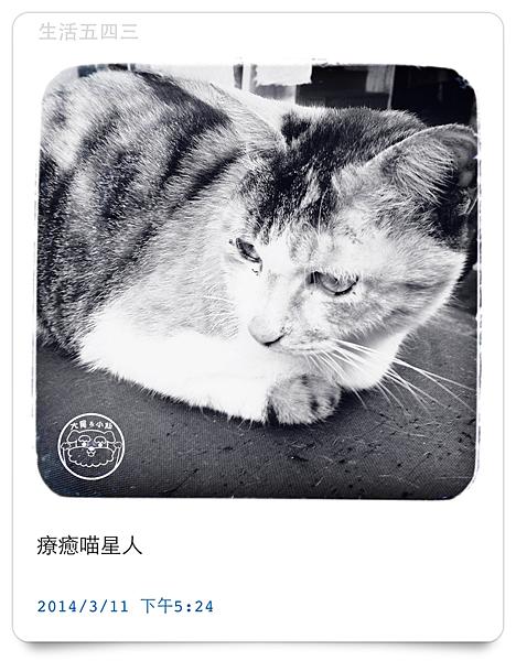 NOTICA照相APP成品貓