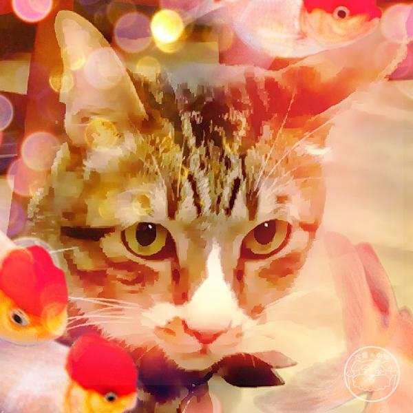 cameran金魚貓