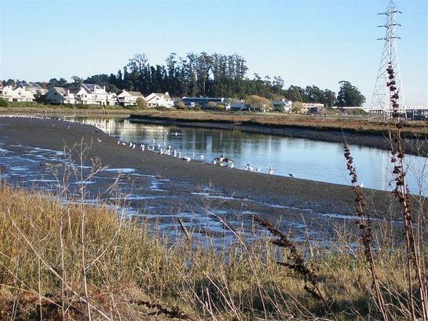Coastal Marsh at Marin County