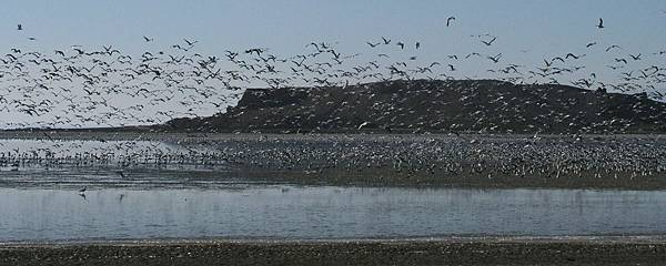 Gulls at Red Hill Marina