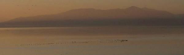 Cormorant at Salton Sea