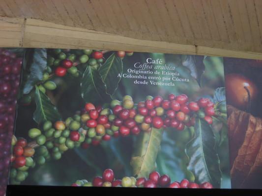 咖啡原產衣索比亞(Medellin植物園cafe)