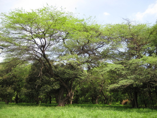 hostel外有塊空地,周圍都是大樹
