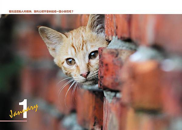 淡水有貓內頁宣傳02.jpg