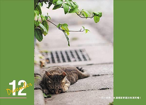 p13-淡水有貓桌曆-12月 拷貝.jpg