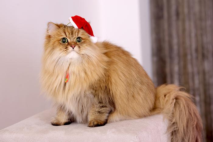 cat (19).jpg