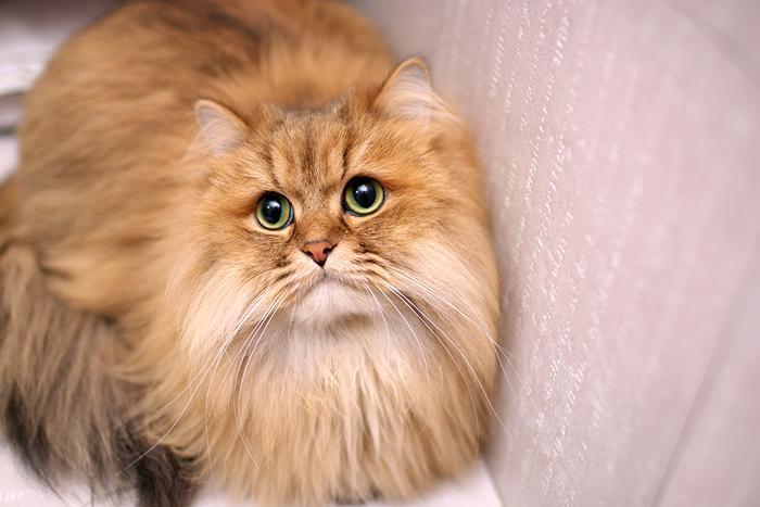 cat (27).jpg