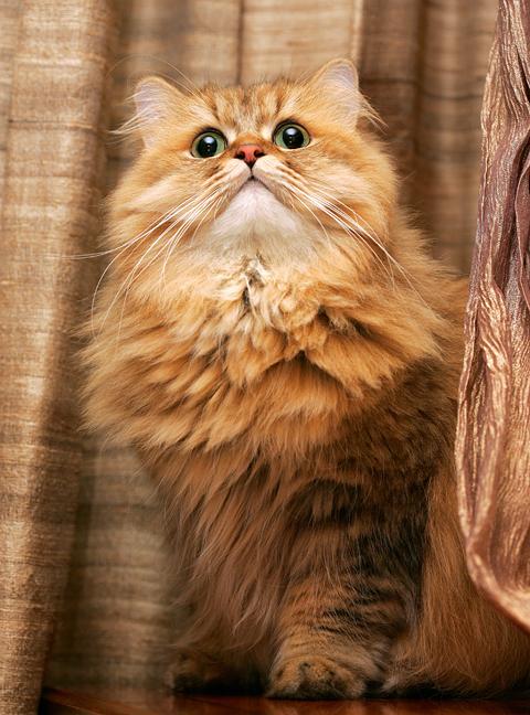 cat (589).jpg