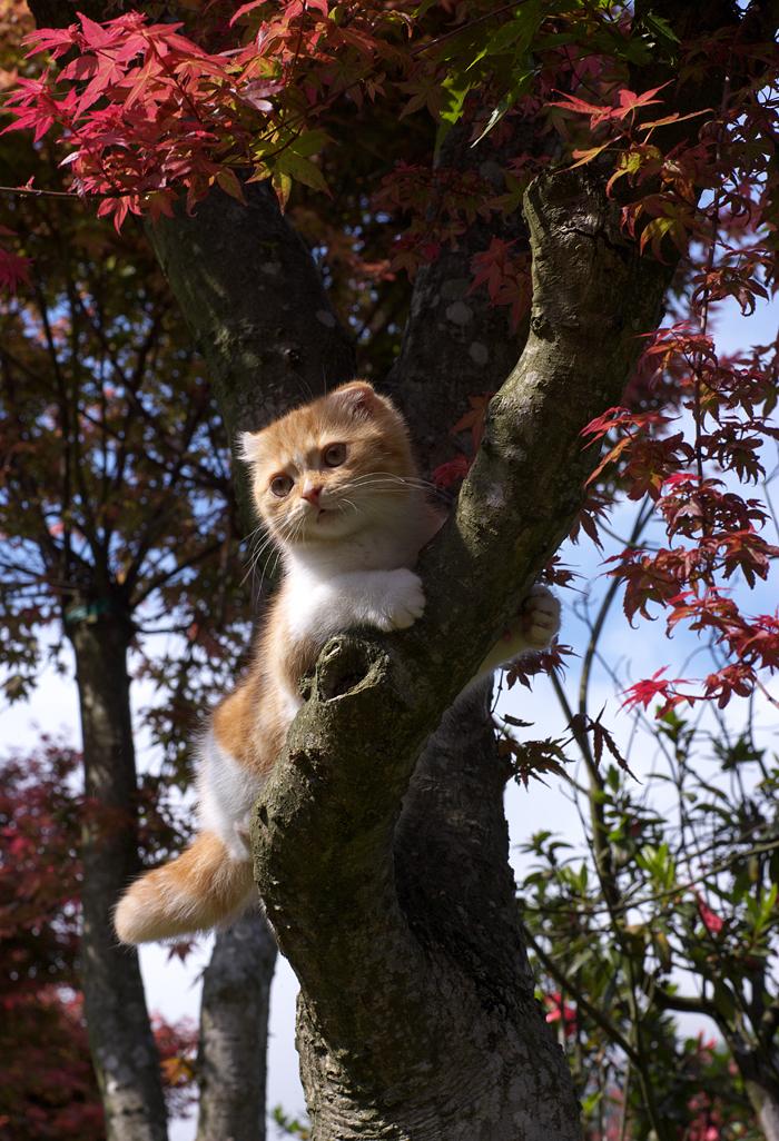 波妞爬樹.jpg