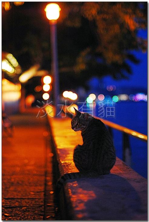 夜‧貓01.jpg