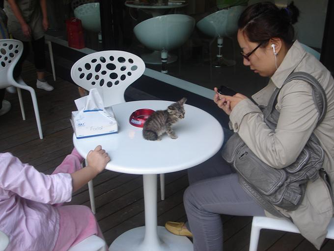 20101006猫摄影展 066.jpg