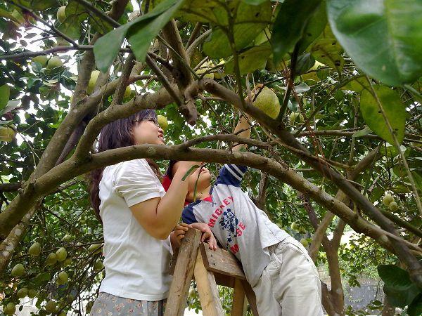 採柚子 018.jpg