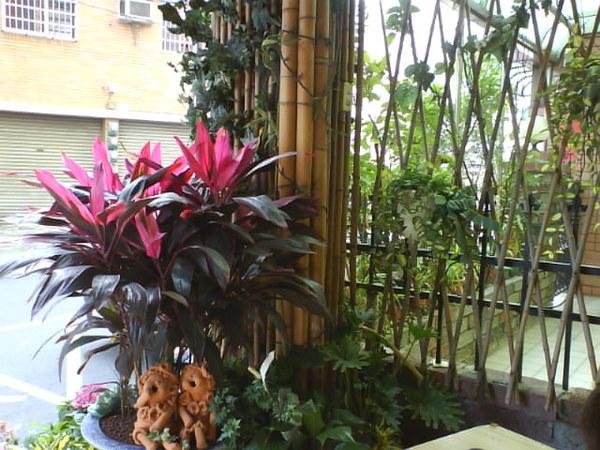 走廊的花景