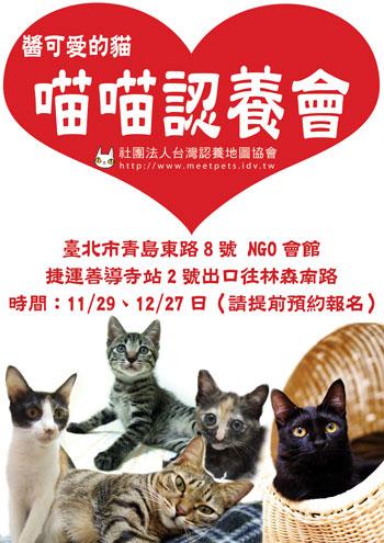2008-kitty-adopt-350.jpg