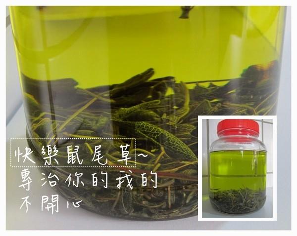 鼠尾草浸泡油02.jpg