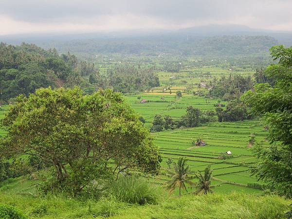 Bali Asli 006