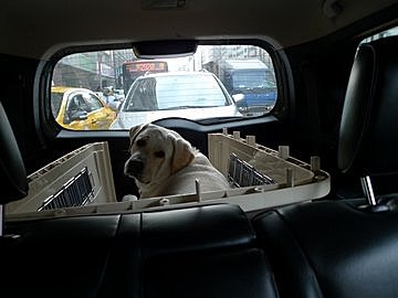 代辨寵物出國檢疫_憨厚拉拉_HERO出國去_寵物出國_大陸_上海篇