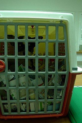 代辨寵物出國檢疫_可愛吉娃娃出國去_寵物出國_菲律賓篇