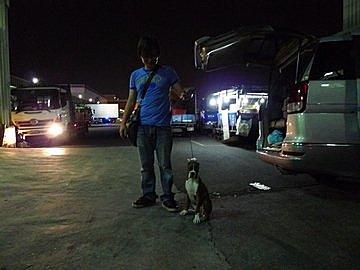 代辨寵物出國檢疫_十二隻臘腸和一隻拳師前往馬來西亞_寵物出國_馬來西亞_吉隆坡和沙勞略