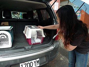 代辨寵物出國檢疫_四隻咪咪和二隻小瑪出國去_寵物出國_大陸_上海和和廈門篇