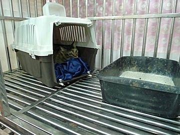 代辨寵物出國檢疫_三犬三貓出國去_寵物出國_大陸_廣州、上海、北京篇