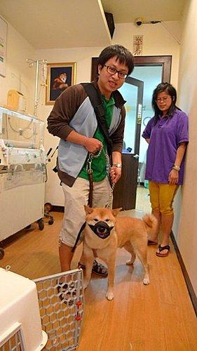 代辨寵物出國檢疫_二隻柴犬前往上海_寵物出國_大陸_上海篇