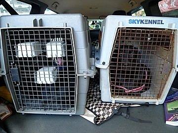 代辨寵物出國檢疫_二隻黑拉拉出國去_寵物出國_緬甸篇